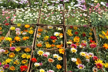 Custom Seasonal Planting Programs